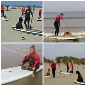 Hond surf en suples surfkaravaan surfschool ouddorp