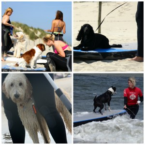 honden surfles en suples surfschool surfkaravaan Ouddorp