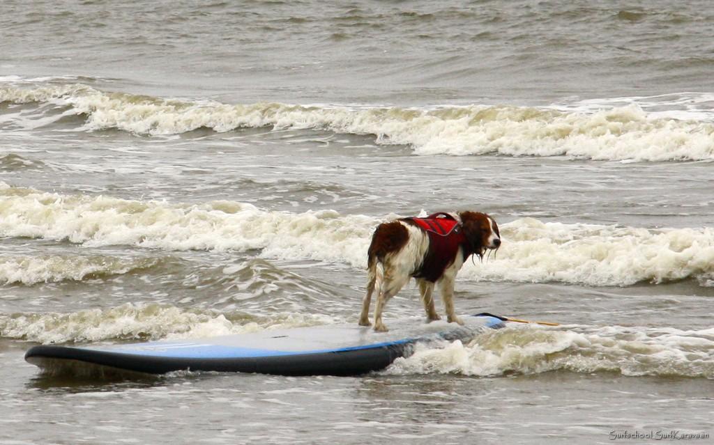 hondensurfles surfkaravaan