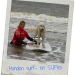 hondensurfles surfschool surfkaravaan Ouddorp