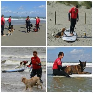 honden surfles surfschool surfkaravaan ouddorp